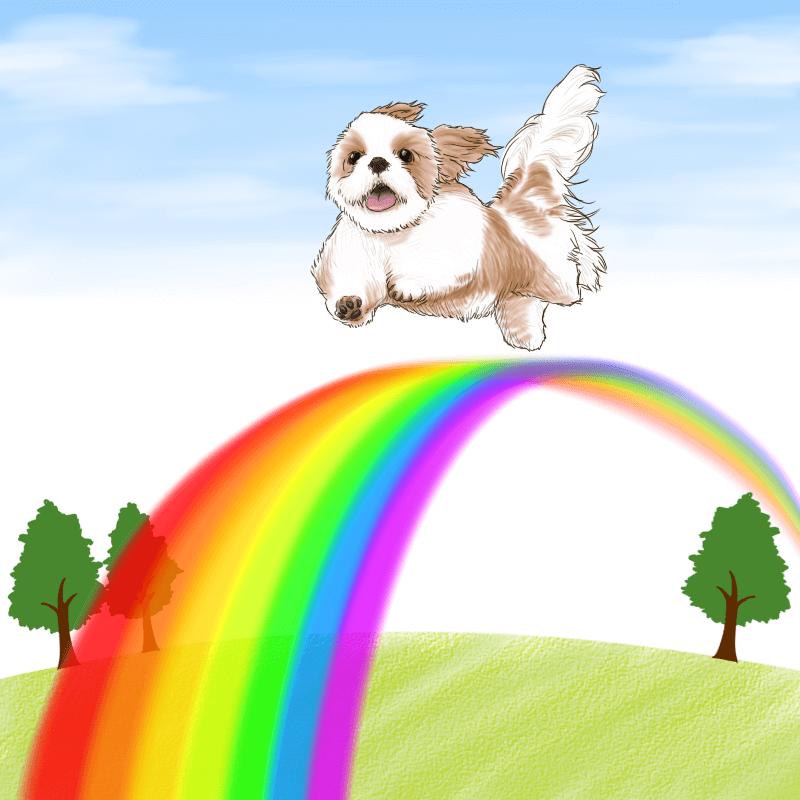 虹の橋を渡るシーズー犬白茶の無料イラスト そざいら